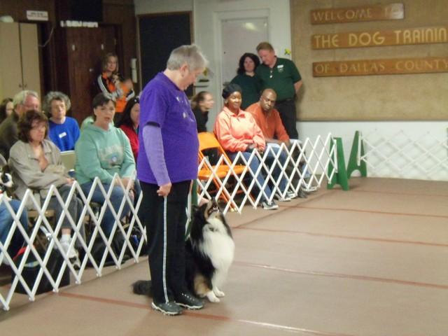 San Antonio Dog Training Co