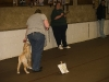 dtcdcpuppyclasssession01017