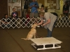dtcdcpuppyclasssession01020